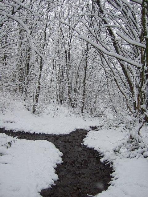Woodland near Merrydale brook, Slaithwaite