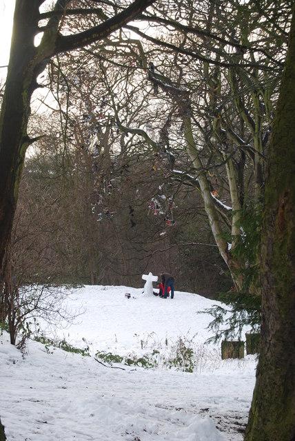 Shoe Tree, Armstong Park