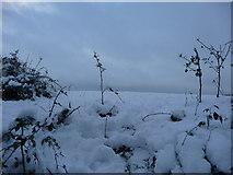 SS9412 : Tiverton : Snowy Field by Lewis Clarke