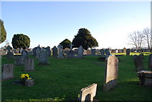 ST0642 : St Decuman's Churchyard by N Chadwick