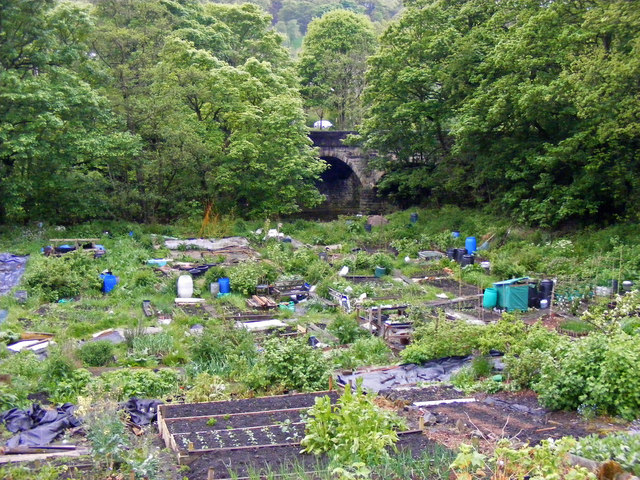 Allotments between Mayroyd Lane and the River Calder