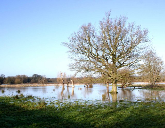 Trees in a flooded field by the Avon