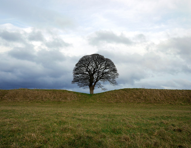 Tree at the Giant's Ring