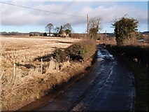 NY9266 : Howford Lane and Broom Park by Clive Nicholson