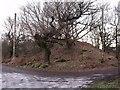 NS7378 : Castle Hill Motte by Robert Murray