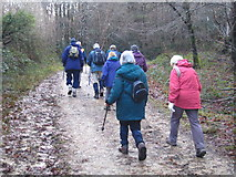 SX0149 : Forest track in Shepherdshill Wood by Rod Allday