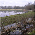 SU8985 : Toad of Toad Hall's Marsh Meadow by john shortland