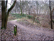 TG2707 : A woodland walk in Whitlingham Country Park by Evelyn Simak