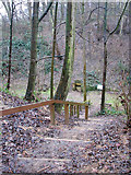TG2707 : A woodland walk in Whitlingham Country Park - steep steps by Evelyn Simak
