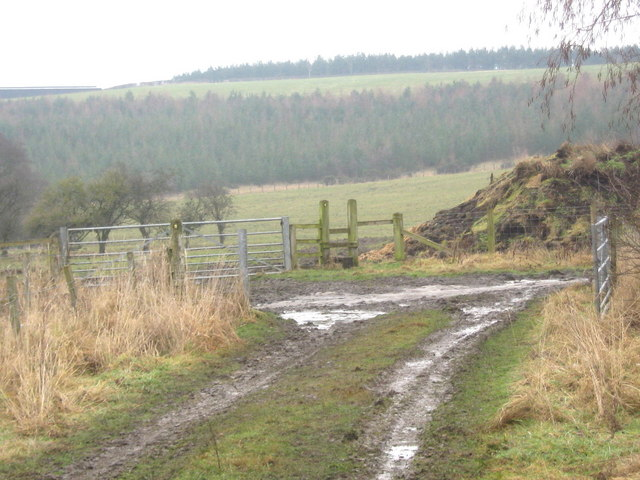 Public Rights of Way junction east of Evenwood