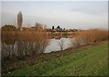 SK8096 : Gunthorpe across the river Trent by roger geach