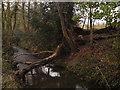 SU6407 : Bushy Coppice borders this stream by dinglefoot