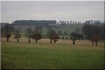 TQ5244 : Parkland, Penshurst Park by N Chadwick