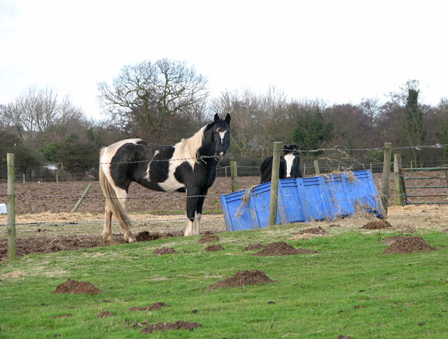 Ponies by feed trough in paddock south of Doles Farm