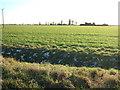 TF5222 : Reclaimed farmland on New Common Marsh by Richard Humphrey