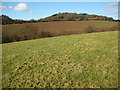 SO7457 : Farmland at Berrow Green by Philip Halling