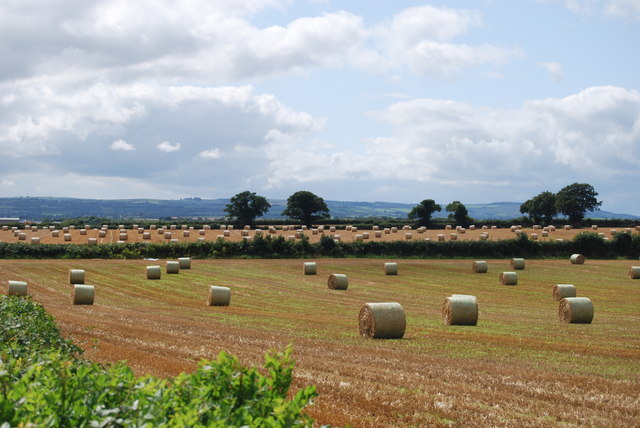 Field of straw bales in White Bog, Co Laois.