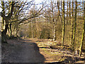 SJ9791 : Etherow Country Park by David Dixon