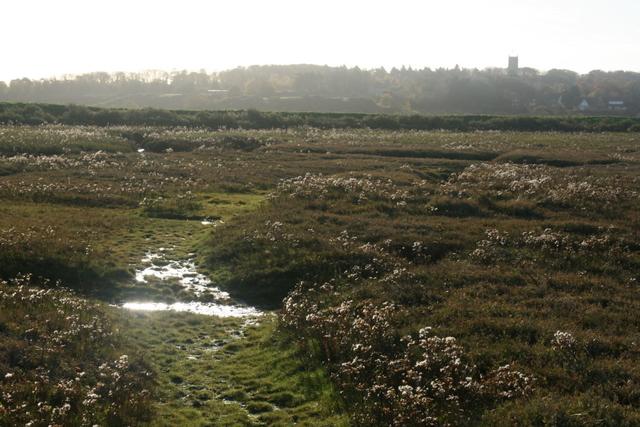Landward from Blakeney marshes