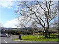 SO3103 : Oak tree by the A4042 by Jonathan Billinger
