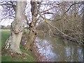 TQ5445 : River Medway flowing downstream by David Anstiss