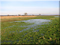 TG3304 : Waterlogged marsh pastures south of Short Dike by Evelyn Simak