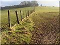 ST4993 : Field boundary near the Grondra by Ruth Sharville