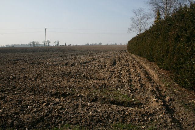 Field beside Butter's Hall Lane