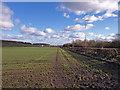 NS4668 : Field beside the A8 by wfmillar