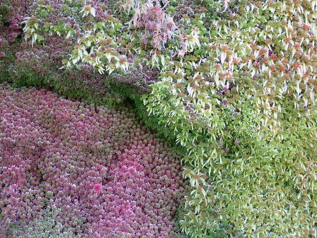 It's just dull and uninteresting old moss!