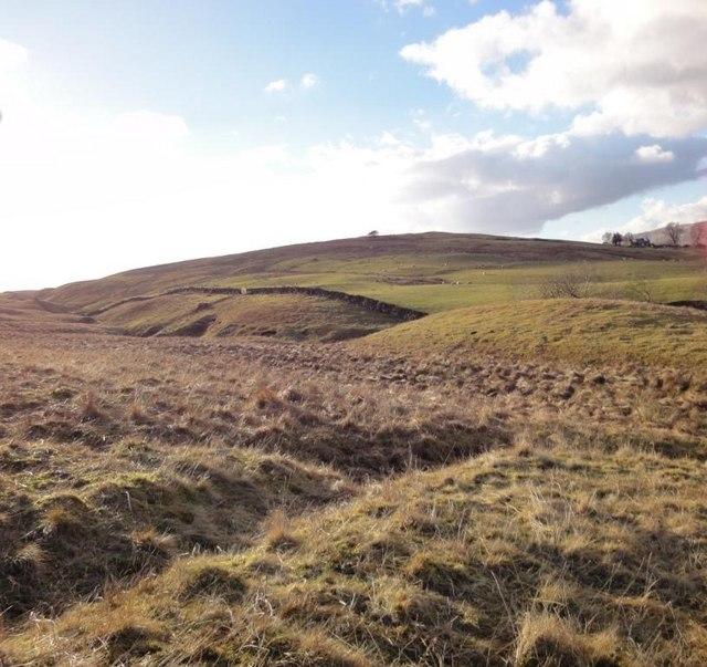 Corriedow Hill