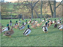 SK2566 : Beside the River Wye, Rowsley by JThomas