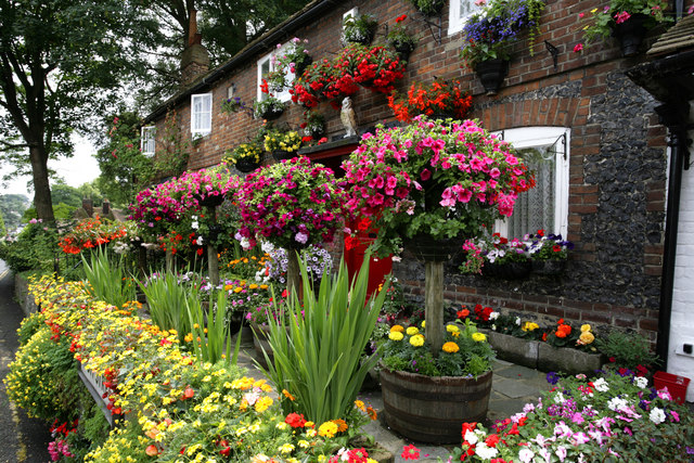 a blooming,terrace