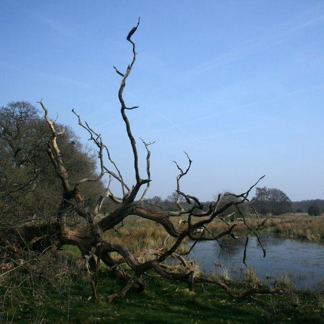 Dead tree and pingo, Thomson Common