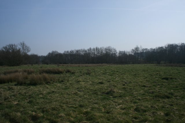Rough grassland and poplars, Thompson Common