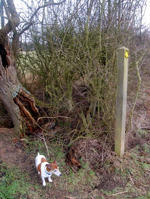 Footpath marker south of Upper Shuckburgh