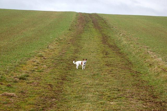 Approaching Bush Hill, Flecknoe, from the south
