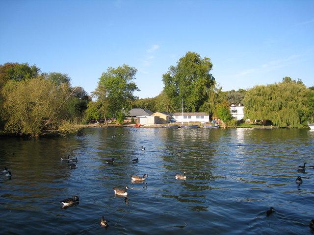 Henley ducks by Sandy B