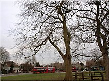 TQ2374 : The recently extended bus terminus at The Green Man on Putney Heath by tristan forward