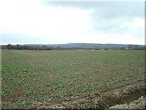TQ5959 : Field near Wrotham by Stacey Harris