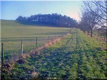 SO7334 : Farm track to Bromesberrow Court by Trevor Rickard