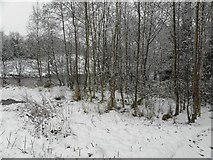 H4772 : Snow, Cranny by Kenneth  Allen