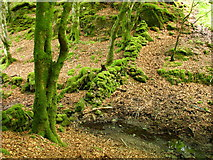 NM4339 : Mossy tree by stream by Stella Summers