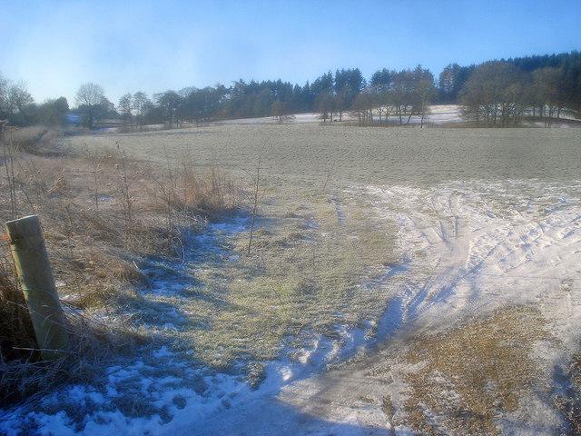 Grassland west of Hergest Road