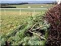 ST9503 : Point to point course, Badbury Rings by Maigheach-gheal