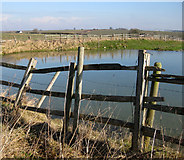 TF2488 : Pond at Calcethorpe by Kate Nicol
