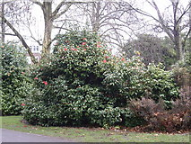 SU4212 : Winter inflorescence in Palmerston Park by Stanley Howe