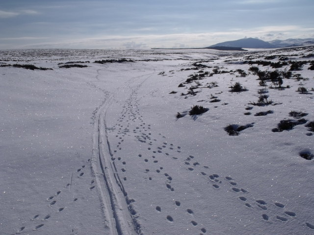 The course of Allt Geallaidh looking south towards Carn nan Seabhag