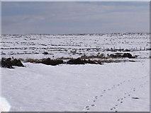 NN7372 : Fence line north of Carn nan Seabhag by ian shiell