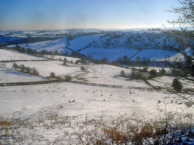 Sheep pasture at the Gladestry Brook valley
